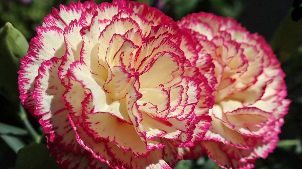 Ecco il significato e da cosa derivano i nomi di 10 fiori bellissimi
