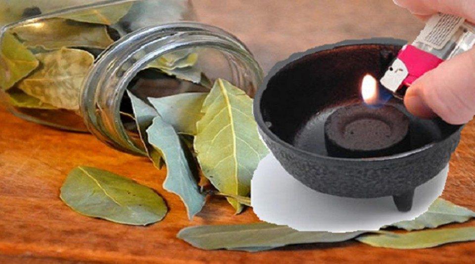 L'alloro: una pianta aromatica dalle mille risorse