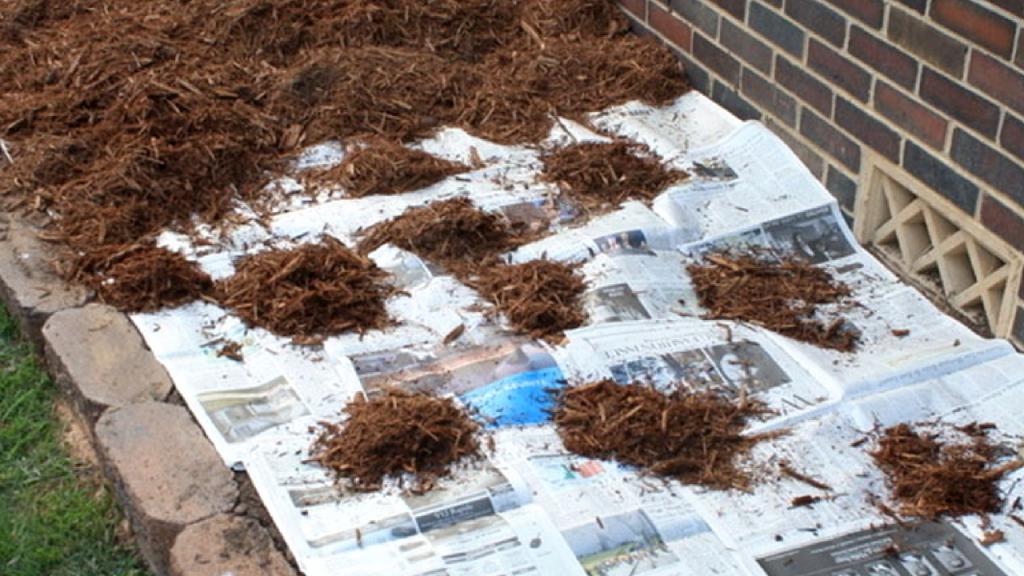 10 modi per raccogliere le foglie cadute e poi riutilizzarle